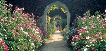 El jardín de mi tío Arturo