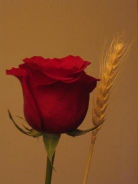 El día de Sant Jordi, 23 de abril