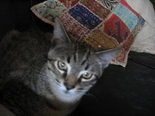 Habemus gato